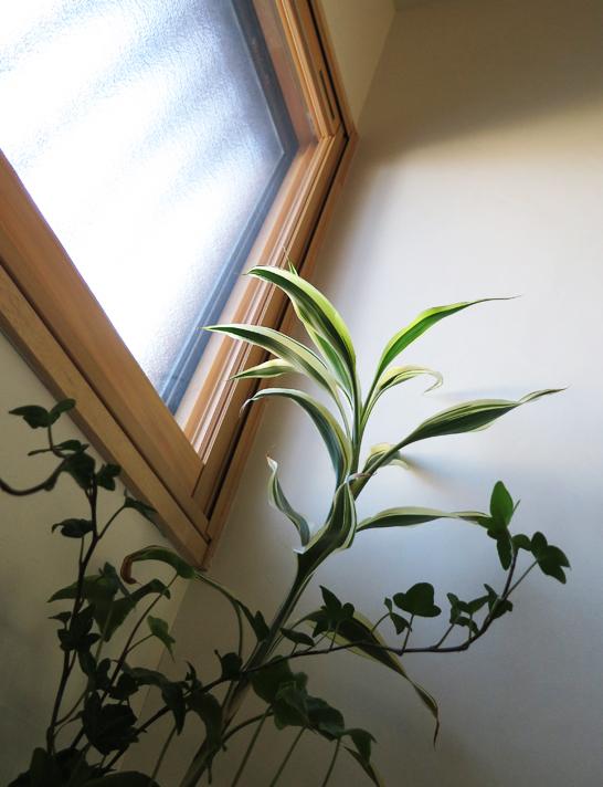 窓からの光と観葉植物