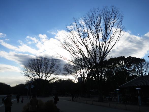 上野公園 逆光