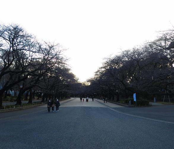 上野公園 冬の桜並木