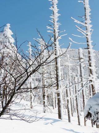 ピラタス蓼科スノーリゾート 北八ヶ岳ロープウェイで樹氷を見に行こう!