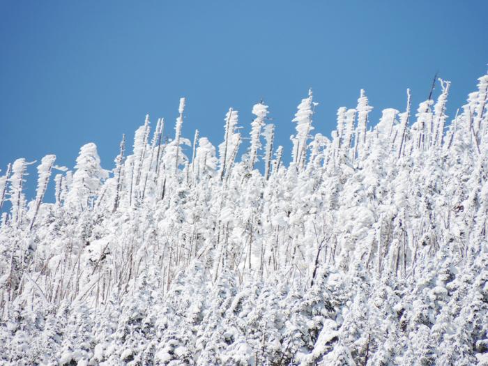 ピラタス蓼科スノーリゾート 樹氷