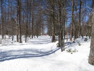 白樺高原国際スキー場:クロスカントリーに挑戦!全長5000mのコース