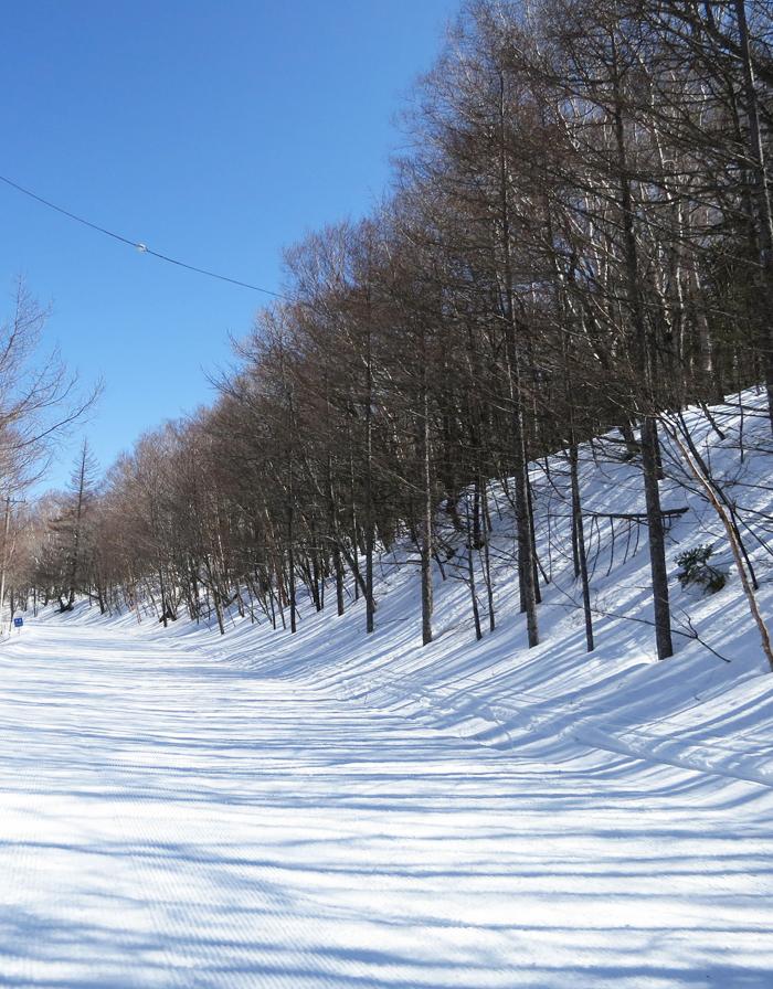 白樺高原国際スキー場 クロカン&チャレンジコース