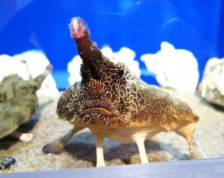 【写真と感想】へんないきもの展〜ナマモノ〜:サンシャイン水族館