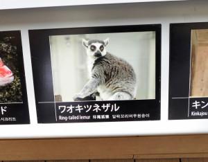 サンシャイン水族館 新種誕生!?