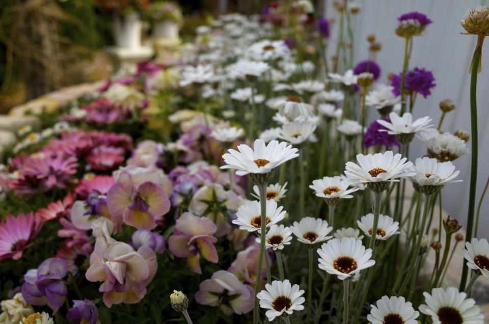 花壇と白い花