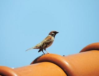 【ネオ一眼】Nikon COOLPIX P520で野鳥の撮影(自宅から)