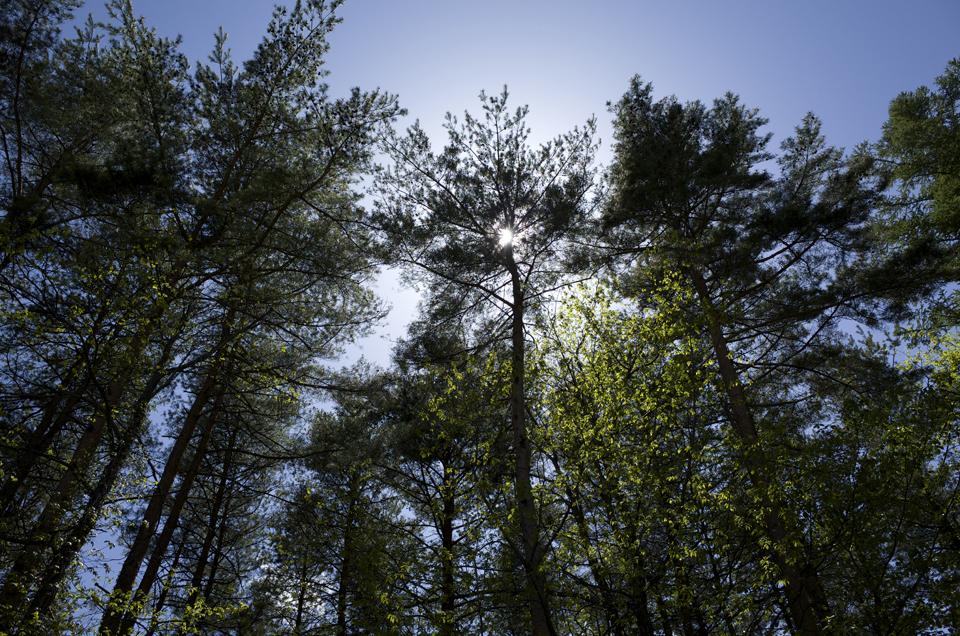 逆光の木々