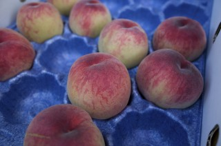 【山梨】桃の季節が来たよ!アレルギーで食べれない人はシャーベットにして食べるといいよ