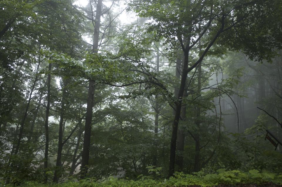 清水高原 霧と雨