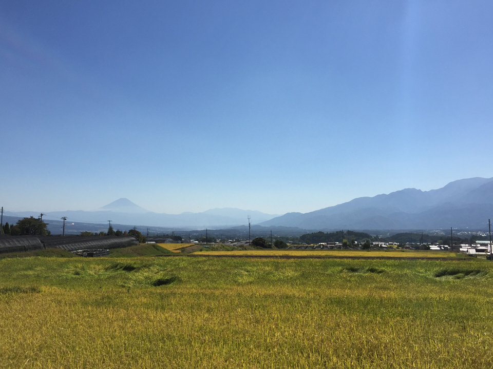 稲穂と富士山