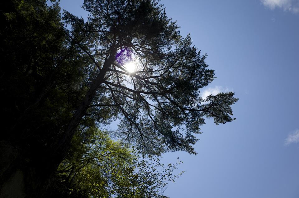 木と空と太陽