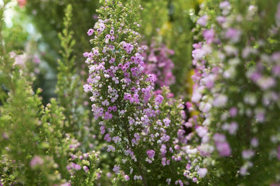 つぶつぶの花