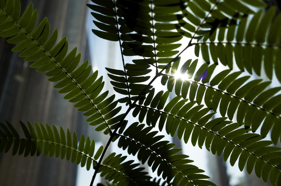 逆光の植物