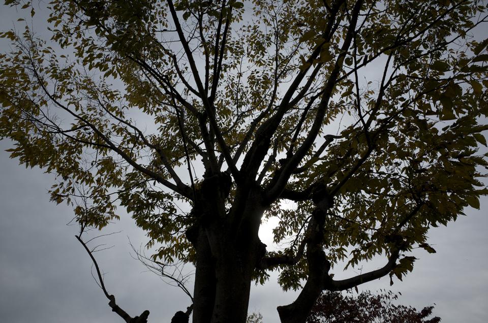 木の写真 修正済み