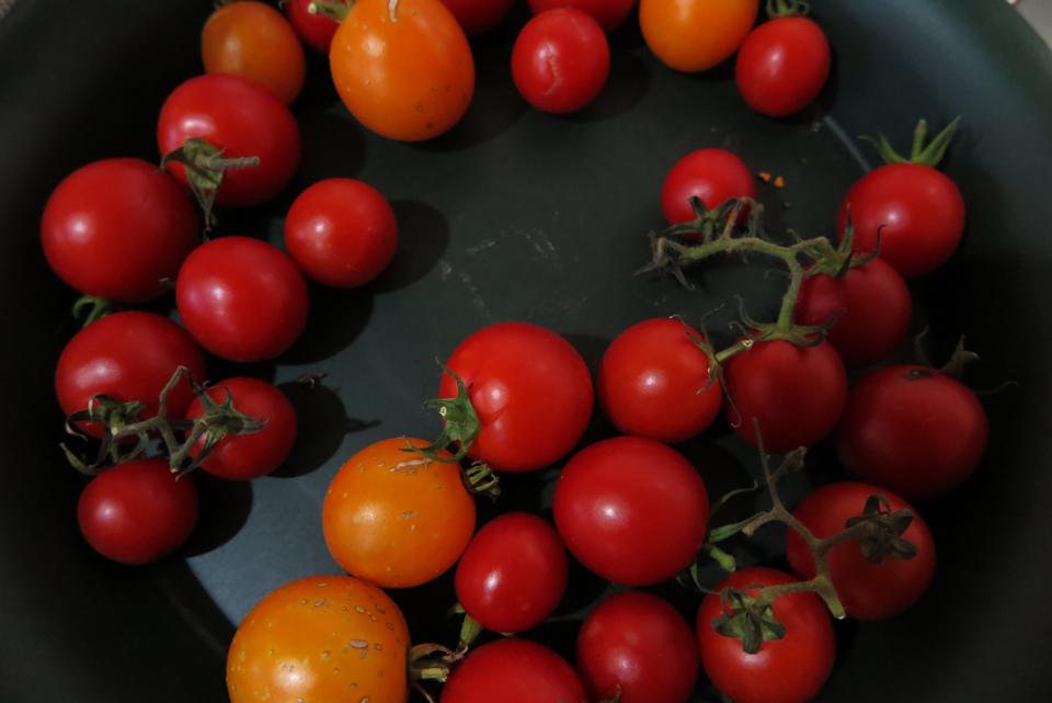 ベランダで採れたミニトマト