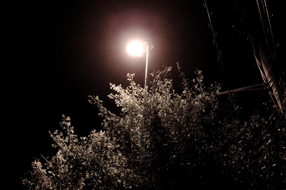 夜の街路樹