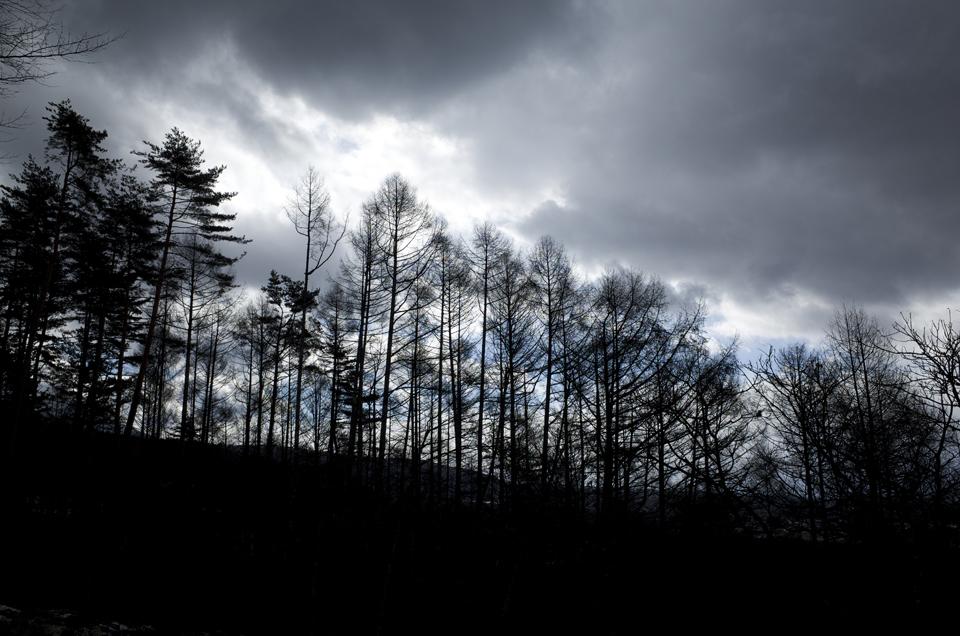 立ち並んだ木と空