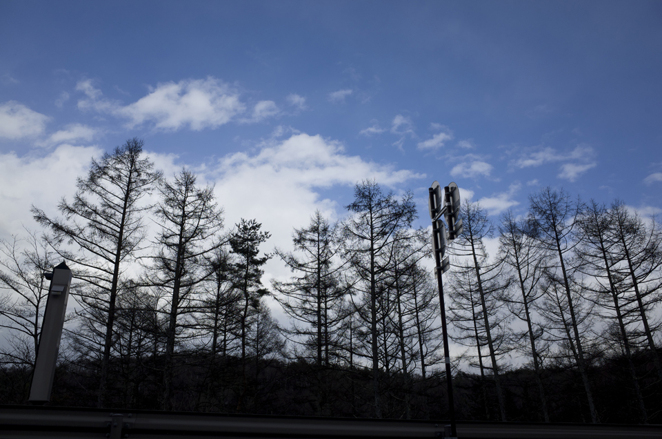 道沿いの木々