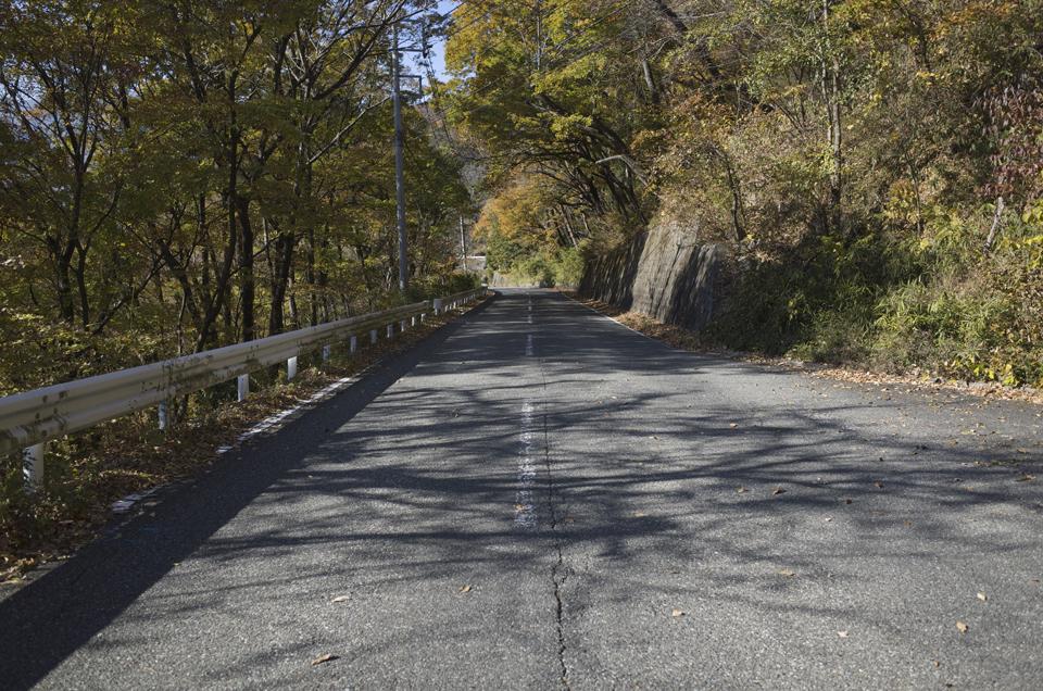 木漏れ日の道路