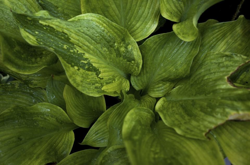 水滴の付いた葉