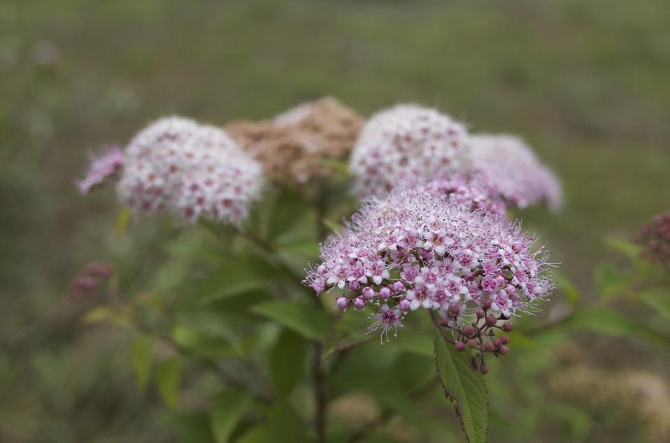 繊細なピンクの花