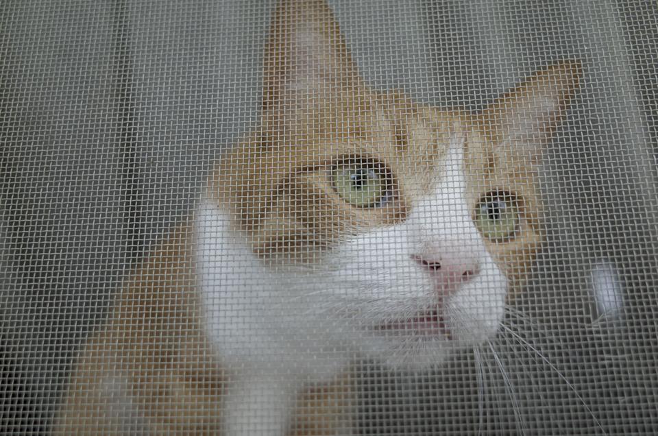 網戸越しの実家の猫