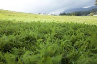 【GRで撮る】植物の写真を撮ると緑色の発色の良さに気づく