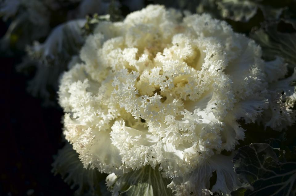 白い繊細な葉の植物