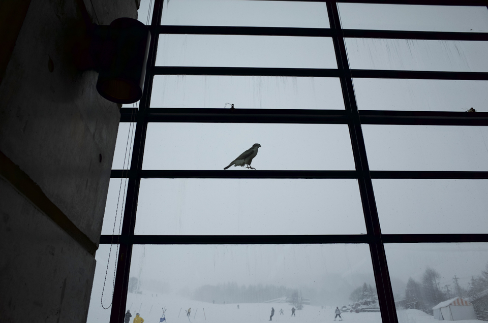 窓に貼られた鳥のシール