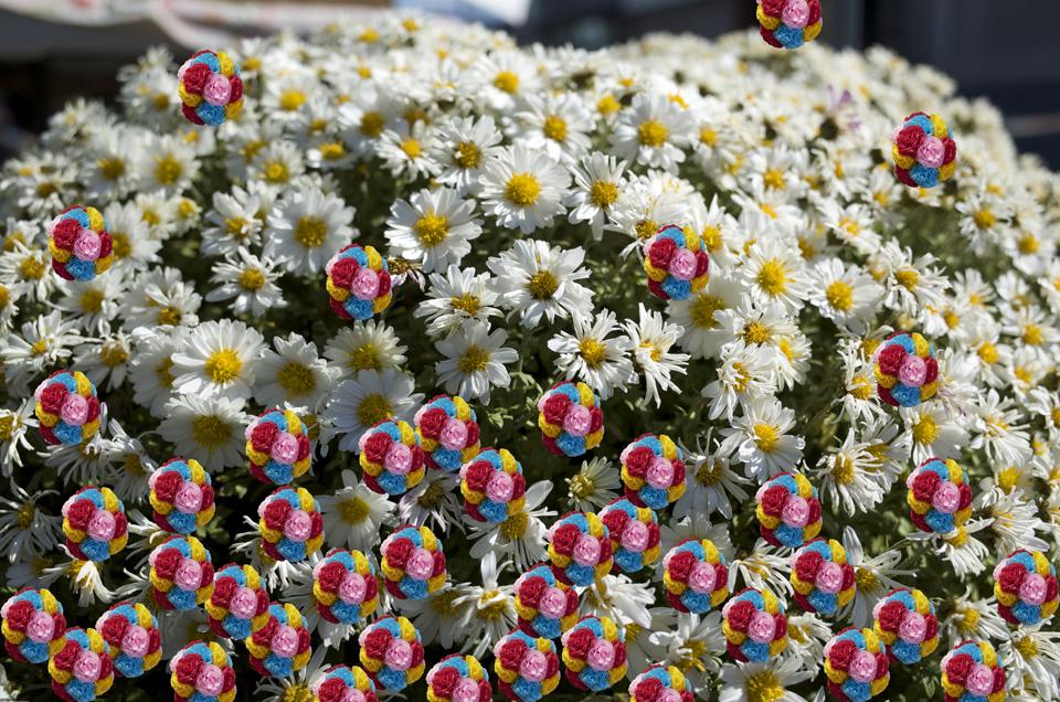 「鼻のための花」コラージュ