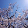 春は桜が咲いてたりとかするから、カメラ片手の散歩が楽しい
