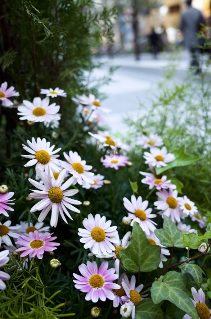 都会の片隅にも花は咲く