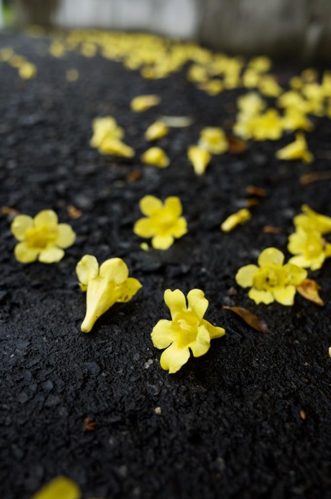 道路に落ちている黄色い花