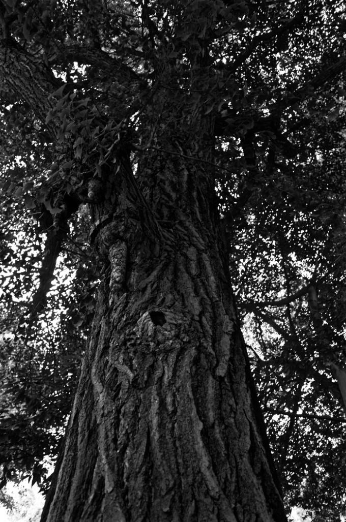 白黒写真の樹木
