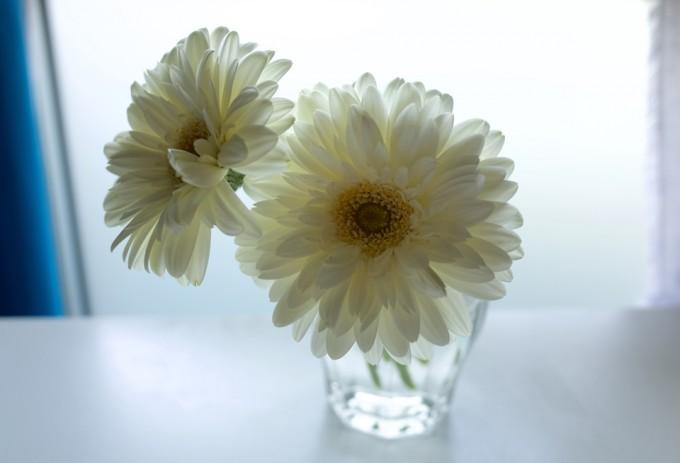 逆光の光が透けてきれいな花