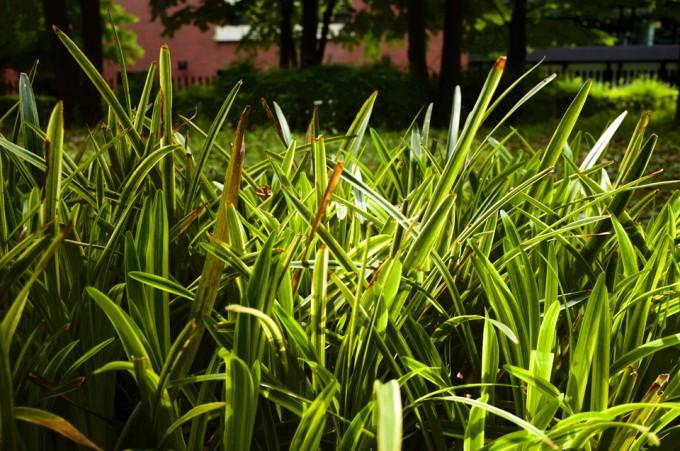 光が落ちている植物