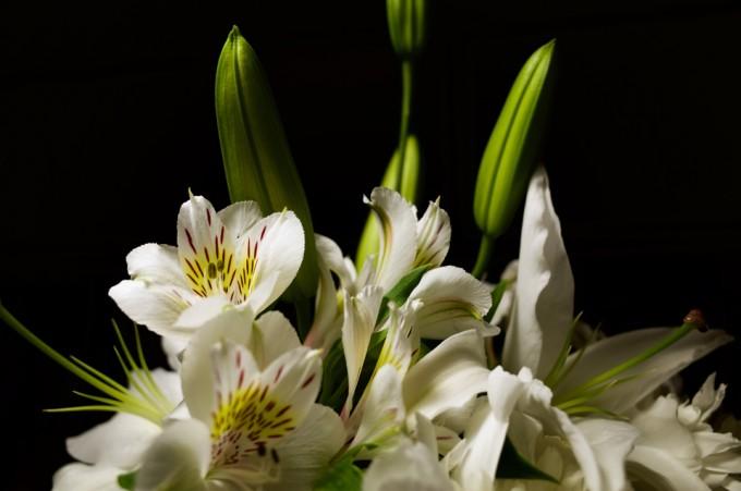 黒い背景と白い花