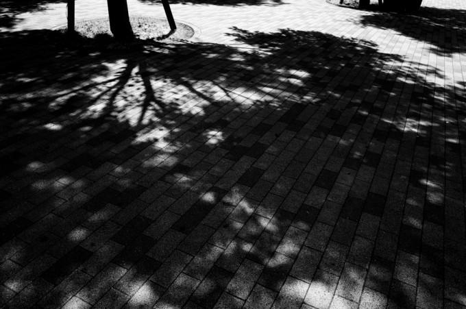 白黒の木漏れ日
