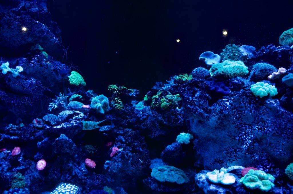 ブラックライトで蛍光色に光る水槽