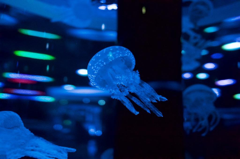 品川アクアパークのクラゲ