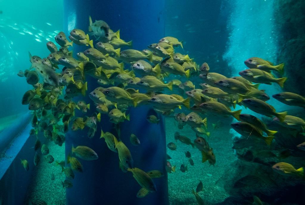 品川アクアパークの魚群